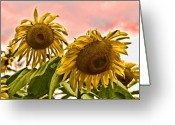 Topaz Greeting Cards - Sunflower Art 1 Greeting Card by Edward Sobuta