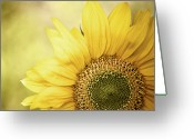Head Greeting Cards - Sunflower Blossom With Bokeh Background Greeting Card by Elisabeth Schmitt