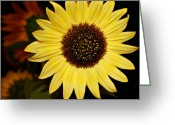 Oregon Photography Greeting Cards - Sunflower Greeting Card by Cathie Tyler