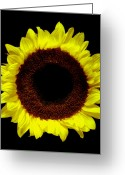 Flower Works Greeting Cards - Sunflower. Greeting Card by Chris  Kusik