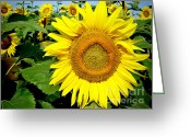Green. Organic Greeting Cards - Sunflower Fields 1 Greeting Card by Julie Palencia