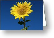 Head Greeting Cards - Sunflower Greeting Card by Fotografias de Rodolfo Velasco