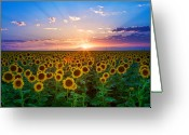 Sunset Image Greeting Cards - Sunflower Greeting Card by Hansrico Photography