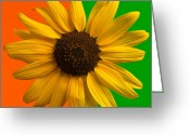 Bright Color Greeting Cards - Sunflower In Orange and Green Greeting Card by Steve Gadomski
