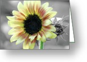 Yellow Greeting Cards - Sunflower iSplash Greeting Card by Kimberly Gonzales