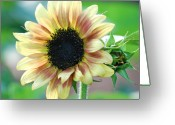 All Greeting Cards - Sunflower Greeting Card by Kimberly Gonzales