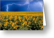 Thunderstorms Greeting Cards - Sunflower Lightning Field  Greeting Card by James Bo Insogna