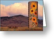 Country Prints Greeting Cards - Sunflower Silo in North Boulder County Colorado Color Print Greeting Card by James Bo Insogna