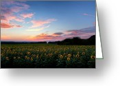 Scenic New England Greeting Cards - Sunflower Sunset Greeting Card by Bill  Wakeley