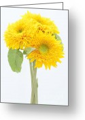 Cheery Greeting Cards - Sunflower Trio Greeting Card by Anne Gilbert