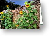 Old Wall Digital Art Greeting Cards - Sunflower Wall Greeting Card by Bill Cannon