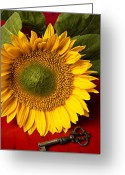 Indoors Greeting Cards - Sunflower with old key Greeting Card by Garry Gay