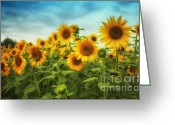 Postwork Greeting Cards - Sunflowers All Over Greeting Card by Jutta Maria Pusl