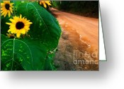 Ronnie Glover Greeting Cards - Sunflowers along a Country Road Greeting Card by Ronnie Glover