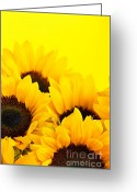 Summertime Greeting Cards - Sunflowers Greeting Card by Elena Elisseeva