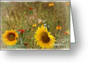 John Kolenberg Greeting Cards - Sunflowers In  The  Wild  Greeting Card by John  Kolenberg