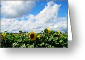 Flowers Floral Greeting Cards - Sunflowers Greeting Card by Jeff Barrett