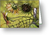Disks Greeting Cards - Sunflowers on a Fence Greeting Card by Susan Isakson