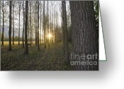 Tree Allee Greeting Cards - Sunlight in the forest Greeting Card by Mats Silvan