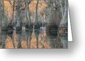 Cypress Knees Greeting Cards - Sunlight Through A Cypress Swamp Greeting Card by Medford Taylor