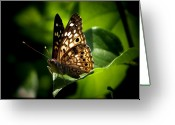Outdoor Still Life Greeting Cards - Sunlit Butterfly Greeting Card by Karen M Scovill