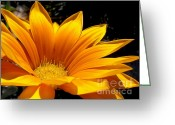 Stamen Greeting Cards - Sunlit Gold Greeting Card by Kaye Menner