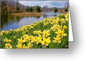 Bill Wakeley Greeting Cards - Sunny Daffodil Greeting Card by Bill  Wakeley