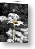 Raining Photo Greeting Cards - Sunny Disposition Despite Showers Greeting Card by Lisa Knechtel