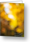 Outdoor Canopy Greeting Cards - Sunny fall forest Greeting Card by Elena Elisseeva