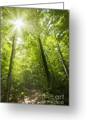 Hiking Greeting Cards - Sunny forest path Greeting Card by Elena Elisseeva