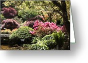 Japanese Maple Greeting Cards - Sunny Japanese Garden Greeting Card by Carol Groenen