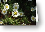 In Focus Greeting Cards - Sunny Side of the Street Greeting Card by Valerie Rakes