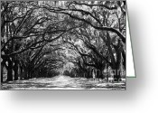 Tree-lined Greeting Cards - Sunny Southern Day - Black and White Greeting Card by Carol Groenen