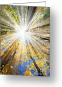 Gold Photo Greeting Cards - Sunrays in the forest Greeting Card by Elena Elisseeva