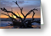 Beach Photo Greeting Cards - Sunrise at Driftwood Beach 5.2 Greeting Card by Bruce Gourley