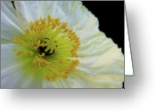 Flower Blossom Greeting Cards - Sunrise Greeting Card by Donna Blackhall