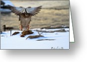 Snow Greeting Cards - Sunrise Duck Landing Greeting Card by Bob Orsillo