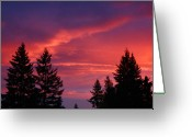 Pink And Purple Greeting Cards - Sunrise Forest Grove Oregon Greeting Card by Nick Gustafson