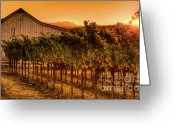 Fall Photographs Greeting Cards - Sunrise Harvest 4 Greeting Card by Mars Lasar