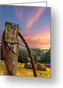 Sports Greeting Cards Greeting Cards - Sunrise Lasso Greeting Card by Debra and Dave Vanderlaan