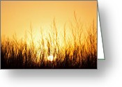 Prairie Native Greeting Cards - Sunrise Over Nachusa Grasslands Greeting Card by Steve Gadomski