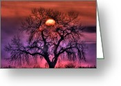 Oak Tree Greeting Cards - Sunrise Through The Foggy Tree Greeting Card by Scott Mahon