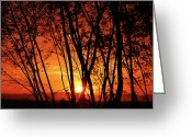 Stock Photography Greeting Cards - Sunrise Through the Trees Greeting Card by  Graham Taylor