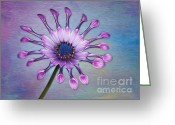 Digitally Enhanced Greeting Cards - Sunscape Daisy Greeting Card by Susan Candelario