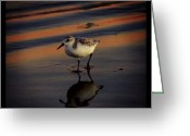 Igdaily Greeting Cards - Sunset And Bird Reflection Greeting Card by James Granberry