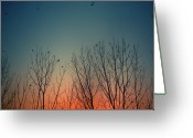 Bare Tree Greeting Cards - Sunset Behind Trees Greeting Card by Luis Mariano González