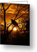 Braches Greeting Cards - Sunset Bird Greeting Card by Paul White