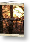 Shining Sun Kiss Mountains Greeting Cards - Sunset Branch Out  Greeting Card by Debra     Vatalaro