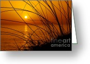 Sparkling Greeting Cards - Sunset Greeting Card by Carlos Caetano