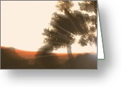 Wild Horse Greeting Cards - Sunset Greeting Card by El Luwanaya Arabians